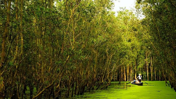 Tra Su Mangrove Forest
