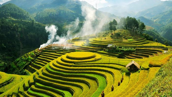 Stunning terrace rice fields