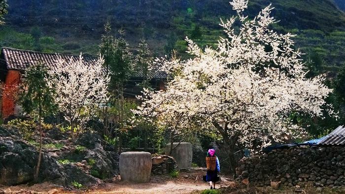 Sapa in spring