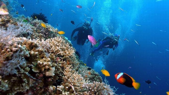 Scuba diving in Con Dao