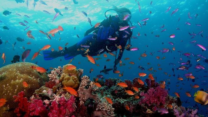 Scuba diving in Phu Quoc