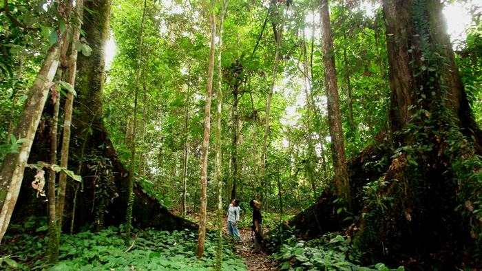 Trekking in Nam Cat Tien National Park
