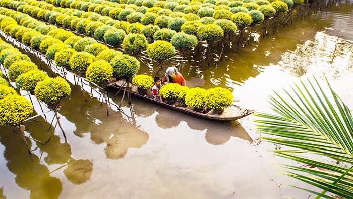 Flower garden in Southern Vietnam