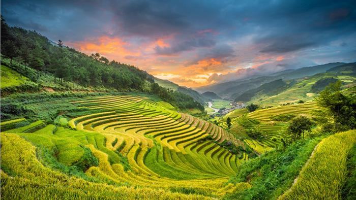 Tourists will see the natural beauty of Mu Cang Chai along the motorbike tour to Sapa (andreluu.com)