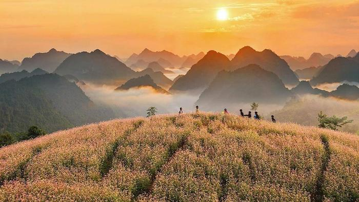 Buckwheat flowers in Ha Giang