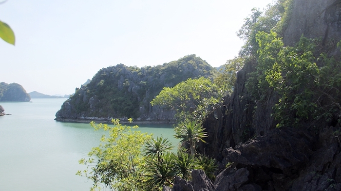 Nature on Cong Do island
