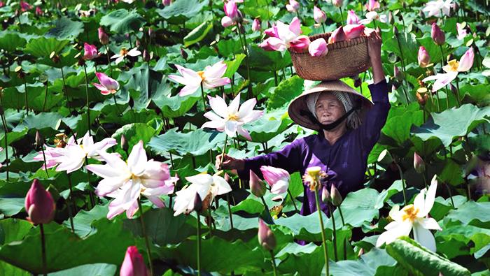 Thap Muoi Plain, Dong Thap province