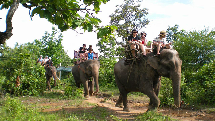 Elephant riding in the Central Highland