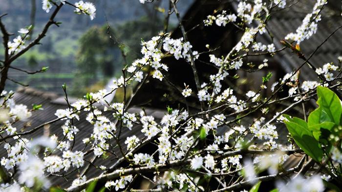 Dien Bien's beauty in spring