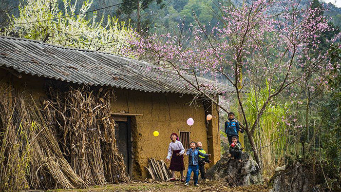 Peach blossoms in Ha Giang (via restravelvn.com)