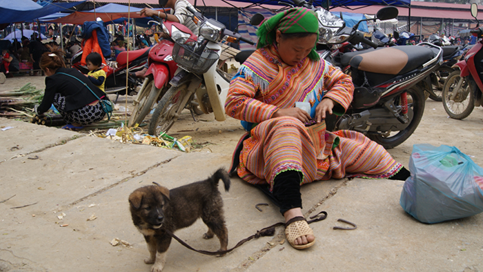 A kind of dog of Bac Ha with thick hair