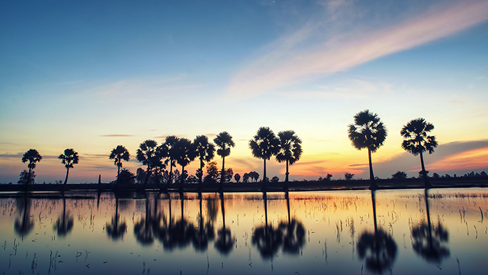 The beauty of Mekong Delta