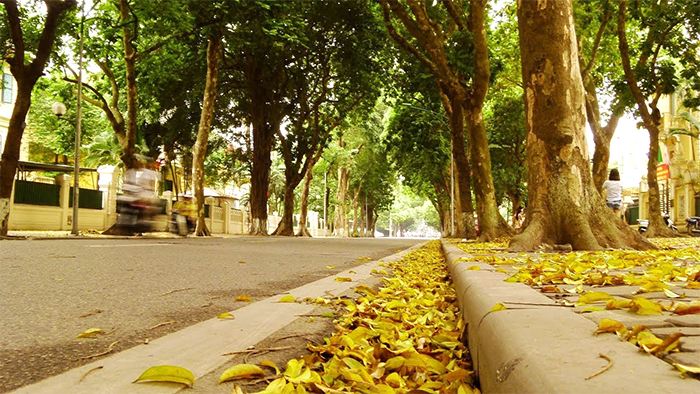 The road of Hanoi in the autumn