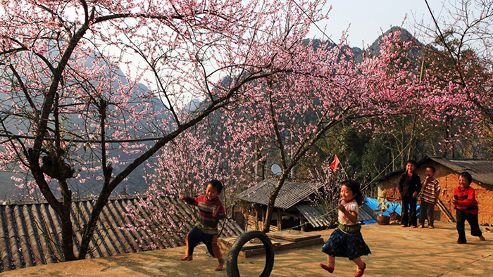 The beautiful image of the Northwest on Tet holiday