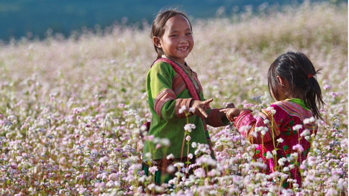 """Buckwheat flowers are the """"specialty"""" of Ha Giang"""