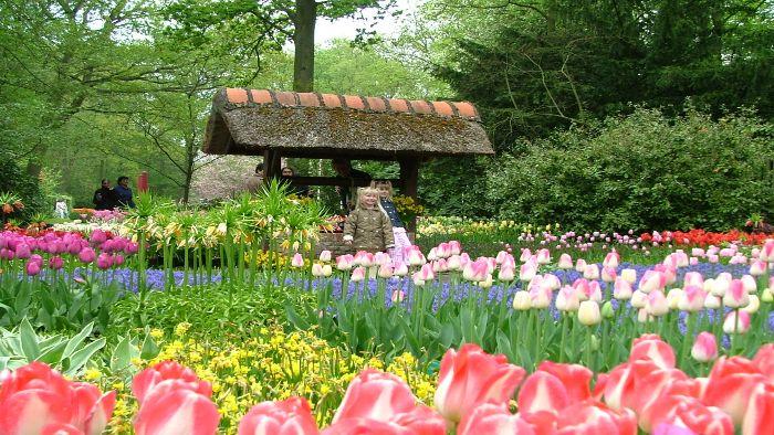 Thanh Tam flower garden