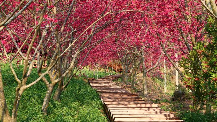 Flower Island in Dien Bien