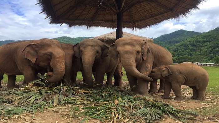 Incredible experiences at Elephant Nature Park in Chiang Mai