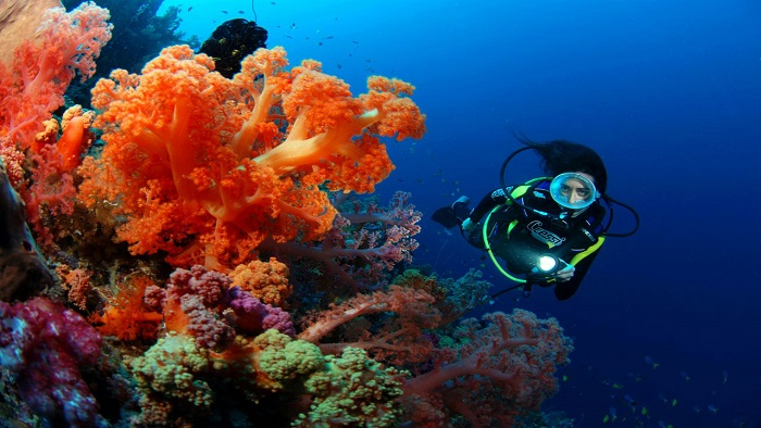 Experiences for Enjoying Amazing Things Do to - Phu Quoc Scuba Diving