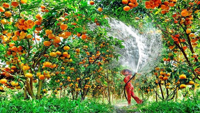 Visit fruit garden