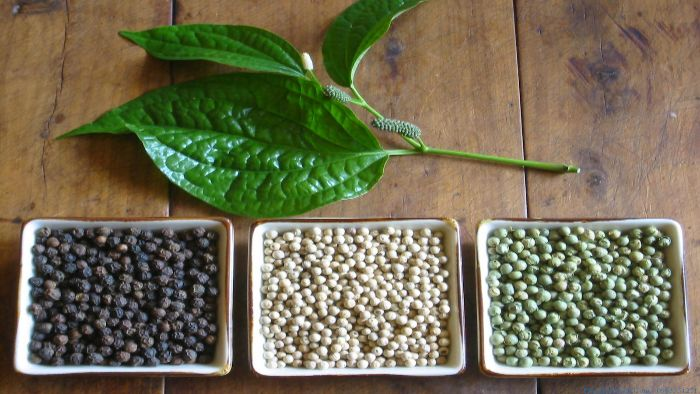 Taste of Phu Quoc pepper