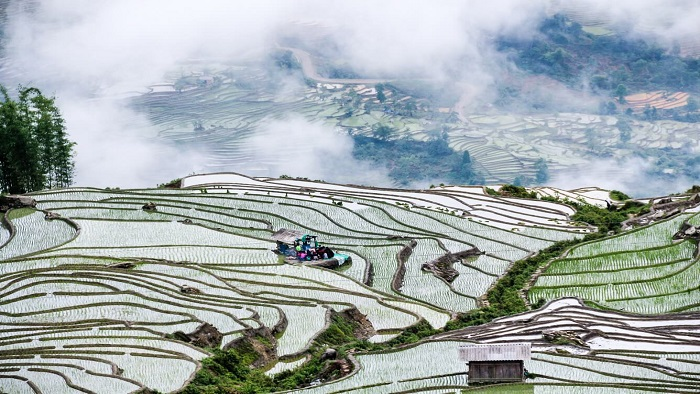 Explore the most beautiful rice terrace